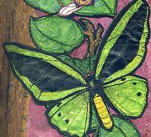 Richmond Birdwing Butterfly by Barbara Nye
