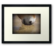 Przewalski's Wild Horse ~ Wishing Well Framed Print