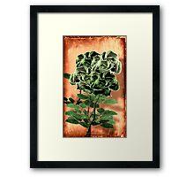 WILD IRISH ROSE - 051 Framed Print