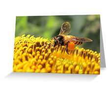 Beauty of the Busy Bee Greeting Card