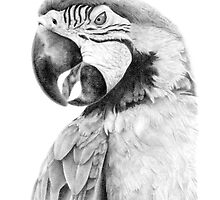 Parrot in Pencil by Paul-M-W