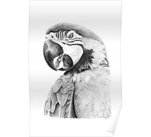 Parrot in Pencil Poster