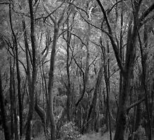 Scary Trees- Wine Shanty Track South by Ben Loveday