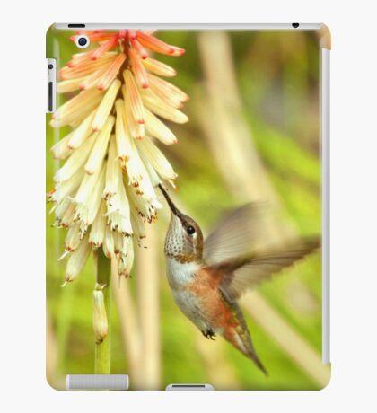 Rufous Hummingbird iPad Case iPad Case/Skin