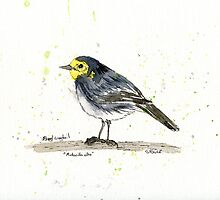 Pied Wagtail by artonthehoof