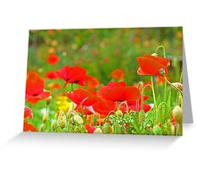 Red Poppies Flowers Meadow Art Prints Greeting Card