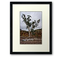 Brachina Gorge trees Framed Print