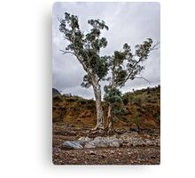 Brachina Gorge trees Canvas Print
