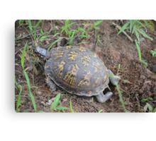 Nesting Box Turtle Canvas Print