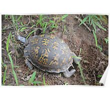 Nesting Box Turtle Poster