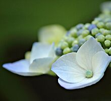Delicate Beginning by Tracy Friesen