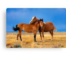Lean on Me, Wild Mustangs Canvas Print