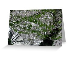 Behind The Cherry Blossoms And Green Leaves Greeting Card