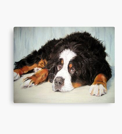 Bernese Mountain Dog Portrait Canvas Print