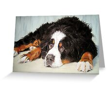 Bernese Mountain Dog Portrait Greeting Card