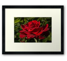 Of Red Roses and Diamonds  Framed Print