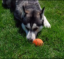 Throw My Ball? by jodi payne