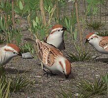 American Tree Sparrow by Ken Gilliland