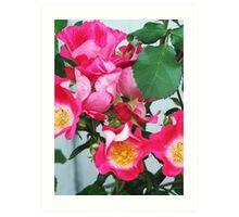 Roses Gone Wild Art Print