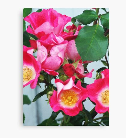 Roses Gone Wild Canvas Print