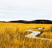 Field of Whispers by eurodak