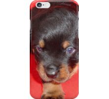 Young Rottweiler Puppy On A Red Background iPhone Case/Skin