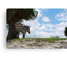 Zebra Enjoying The Shade Canvas Print