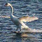 Swan Brakes by Georgia Mizuleva
