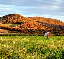 October Wildflowers, Corn & Haybale by Gene Walls