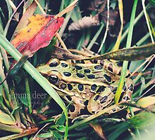 Frogger by Emma Deer Photography