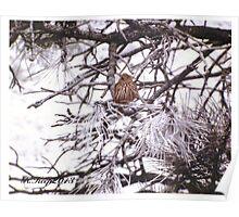 Little Brown Bird Poster