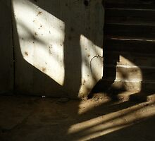 Shadow by Joan Wild