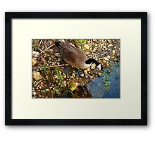 Hungry? Framed Print