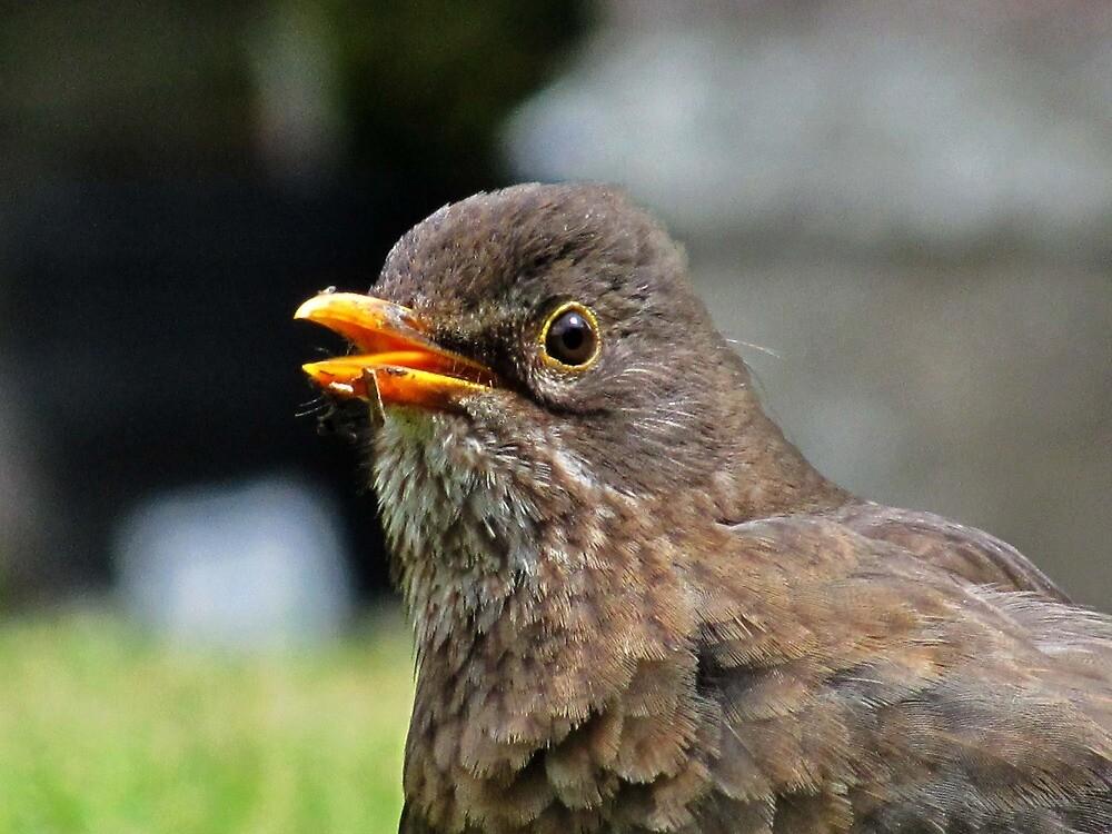 Mrs. Blackbird by Caroline Anderson