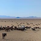 The Wild Horses of Namibia by Beth  Wode