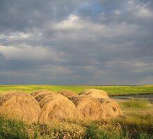 Making Hay in the Prairies, Canada by elvines