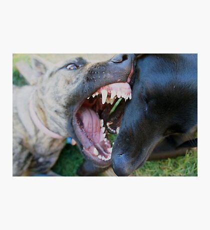 Dog attack. Photographic Print