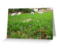 White Galah - 17 07 13 - 03 Greeting Card