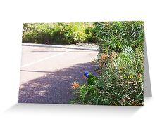 Parrot - 19 07 13 - One Greeting Card