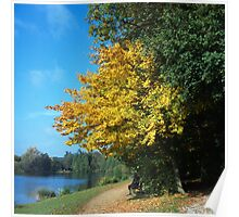 Yellow leaves by the lake Poster