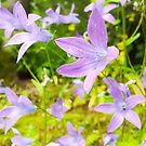 Violet clock flowers by Arve Bettum