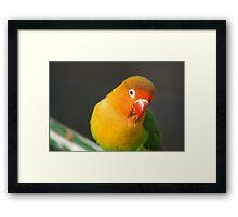 Birds of A Feather #2 Framed Print