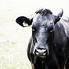 Moody Cow by JHMimaging