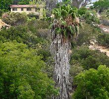 San Diego Canyon by heatherfriedman