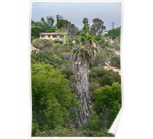 San Diego Canyon Poster