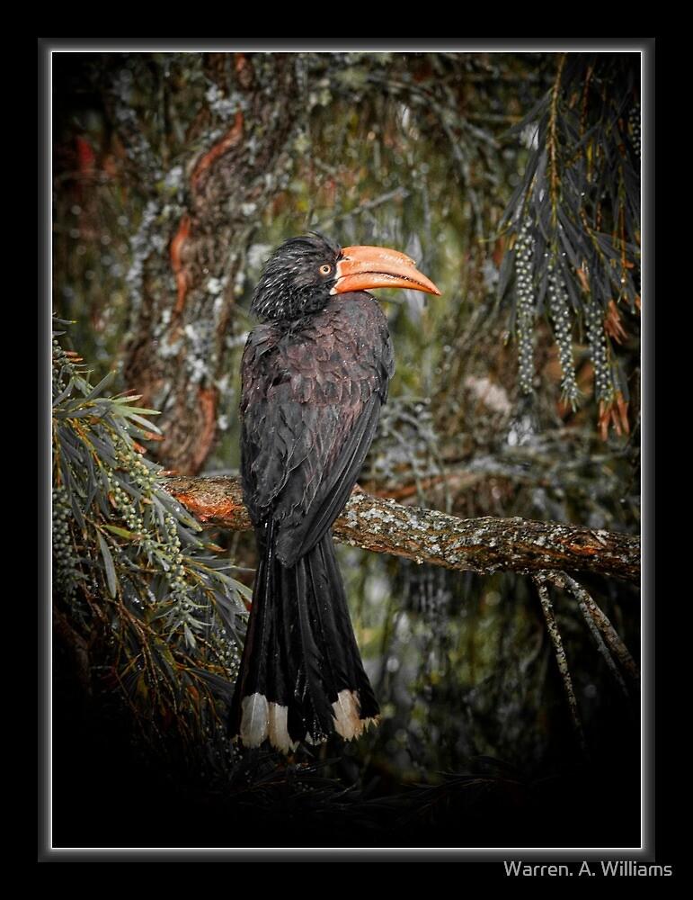 Hornbill Best Back by Warren. A. Williams