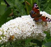 Bee and Butterfly by ElsT