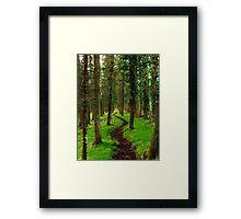 Forrest walk Framed Print