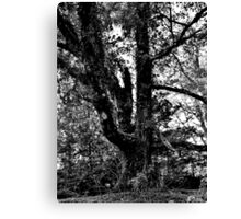 BW Tree Canvas Print