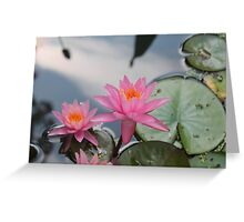 Water lilies, Kenilworth Aquatic Gardens Greeting Card